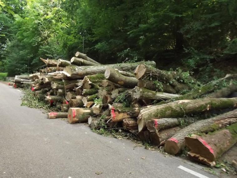 le Tour de France massacre des arbres magnifiques