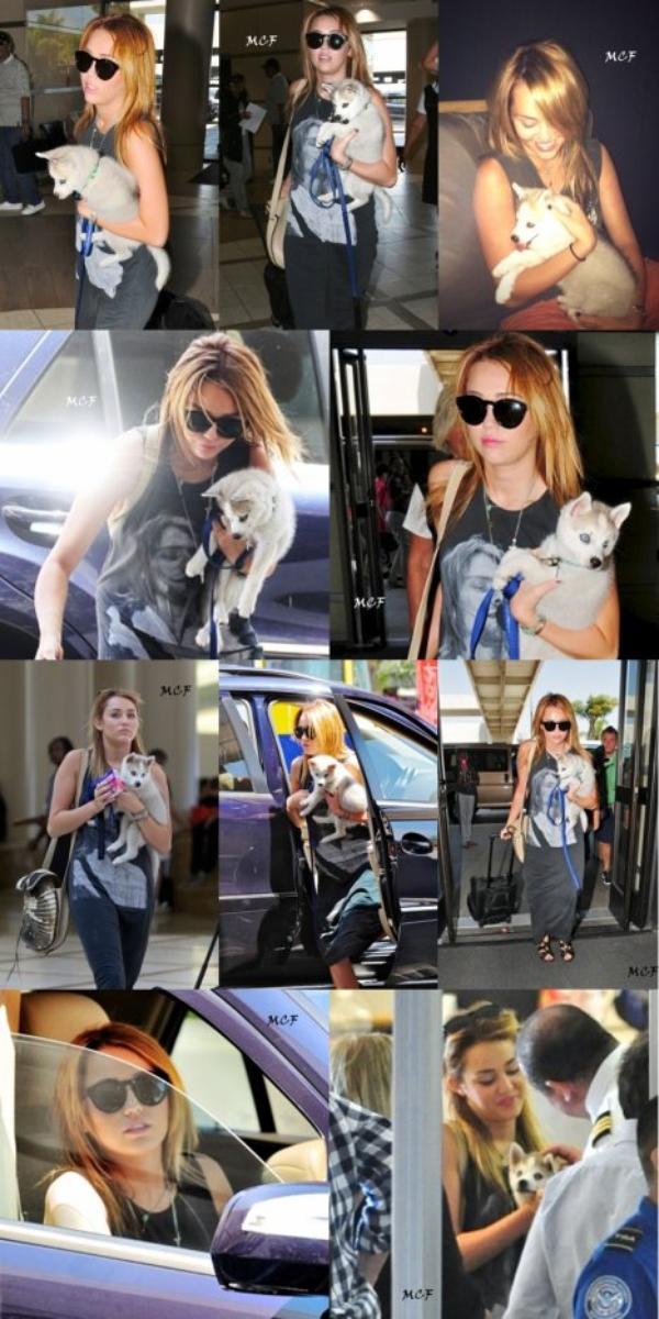 Miley à l'aéroport avec un nouveau chien !!!