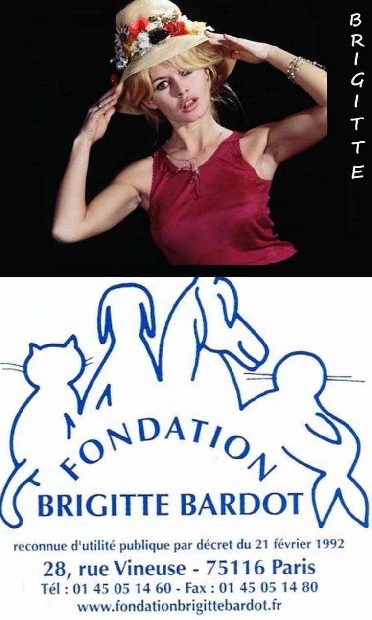 UTILITE PUBLIQUE / (de haut en bas) Brigitte BARDOT Fondation / Shirley MacLAINE / Zsa Zsa GABOR / Shirley TEMPLE / Ann BLYTH / Elizabeth TAYLOR / Jane POWELL / Jayne MANSFIELD