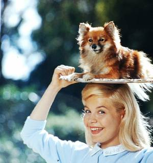 STARS and ANIMALS / de haut en bas / Abbe LANE / Audrey HEPBURN / June LOCKHART / Kim NOVAK / Jennifer JONES / Mamie Van DOREN / Natalie WOOD / Sandra DEE