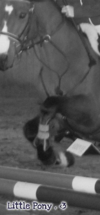 Tous les chevaux sont merveilleux , sauf le nôtre , qui lui est exceptionnel & unique en son genre .. ♥* ~