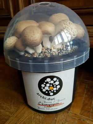 Aux champignons.