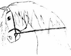 Un cheval au travail