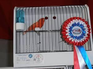 Le PREMIER Concours National d'Ornithologie en Tunisie - 12,13 et 14 décembre 2014 jugé par Mr CHEVALIER Alain / juge OMJ et CNJF