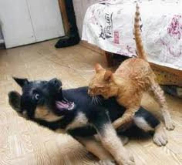 Les Chats Et Les Cheins.