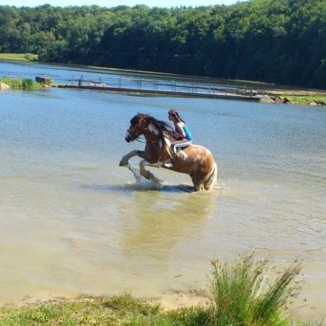"""""""Il n'y a pas de secrets aussi intimes que ceux d'un cavaliers et de son cheval"""""""