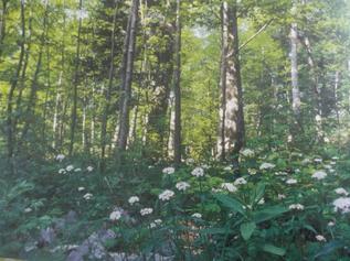 Bois et forêts