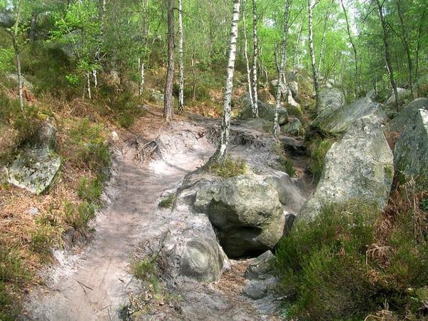 Idée balade, forêt de Fontainebleau