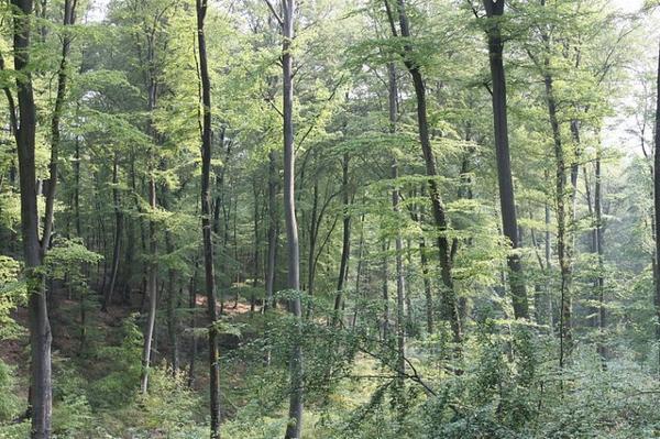Idées promenades _ _ Forêt de Brotonne