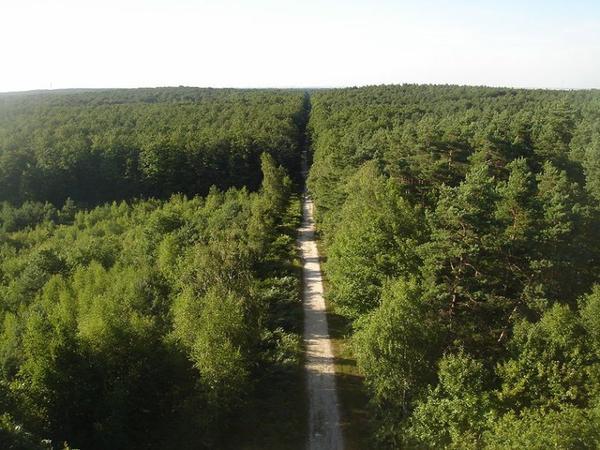 Grandes Forêts _ _ Forêt d'Orléans