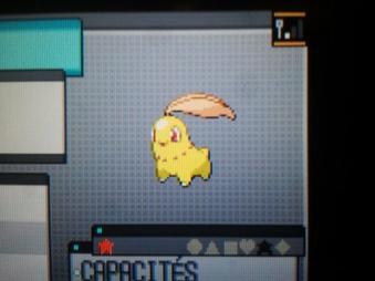 Echange avec PokemonXOnepiece (suite)