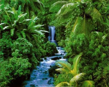 la fontene tropicale