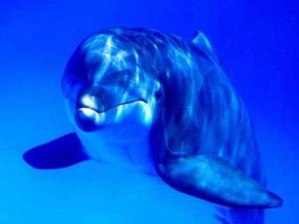 mon dauphin prefere