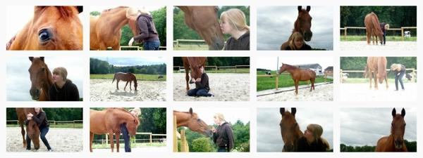 Ce n'est pas un cheval et vous n'êtes pas dans un manège, c'est un partenaire de danse.