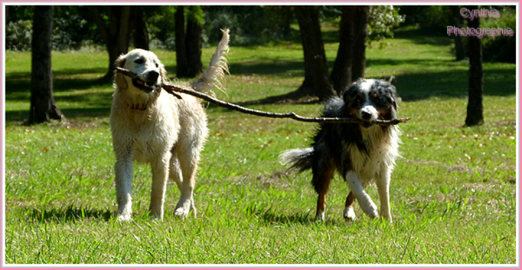 >L'amitié est un ruban doré qui relie le monde entier ♥<