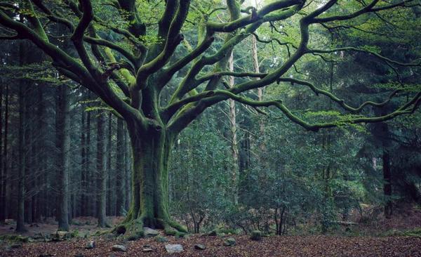 Maudit par cette forêt. [ /!\ Ceci n'est pas un texte d'épouvante /!\ ]