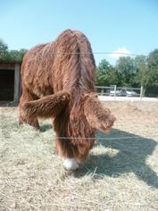 Des chevaux a vendre !!!!  (suite)
