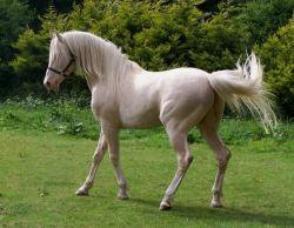 Daizy & Eclair chevaux de tat98
