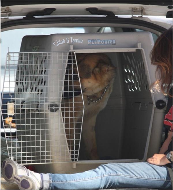 Enrique Iglesias adopte un chien • 28 avril 2012
