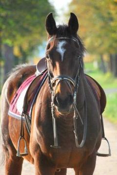 L'air du paradis souffle entre les oreille du cheval ♥.