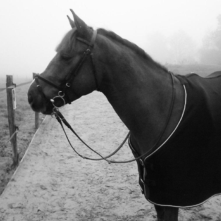 """"""" Le cheval a la perception comme il a la sensation, la comparaison et le souvenir ; il a donc le jugement et la mémoire, il a donc l'intelligence"""""""