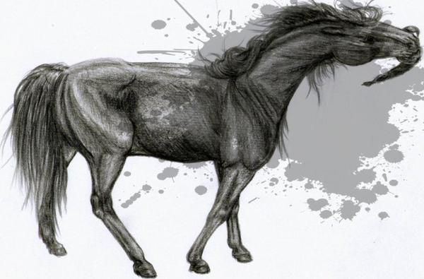 Un jeu de cheval