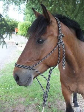 """Faîtes du cheval un compagnon et non un esclave, vous verrez quel ami extraordinaire il est."" Nuno Oliviera"