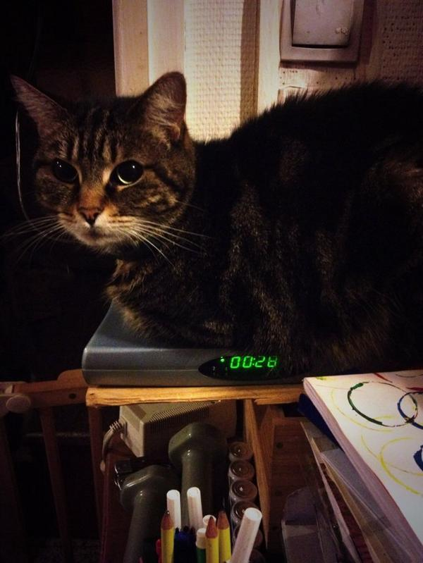 Un chat, une freebox