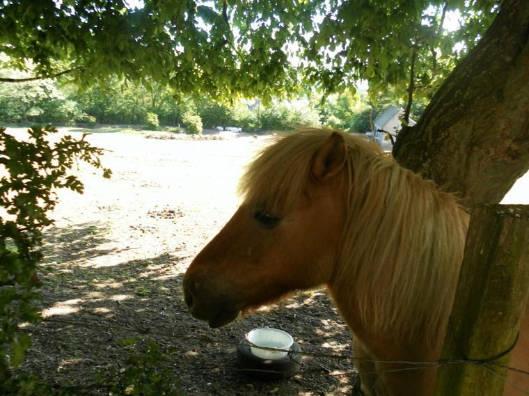 « Pour parler à un cheval, il n'y a pas besoin de mots; c'est une étreinte charnelle qui alimente nos rêves.. »_♥