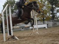 Petite séance saut ♥ !!!