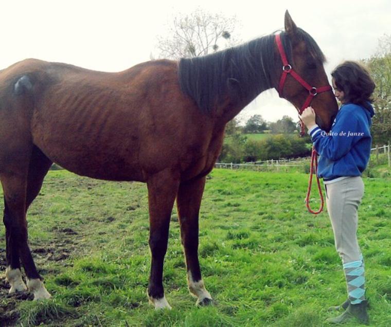 J'ai trouvé le cheval de mes rêves..♥♥