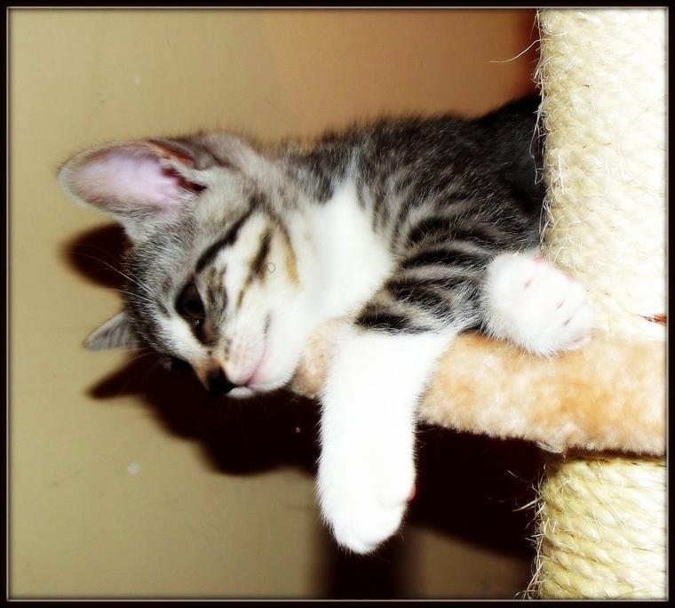 Photo de chaton