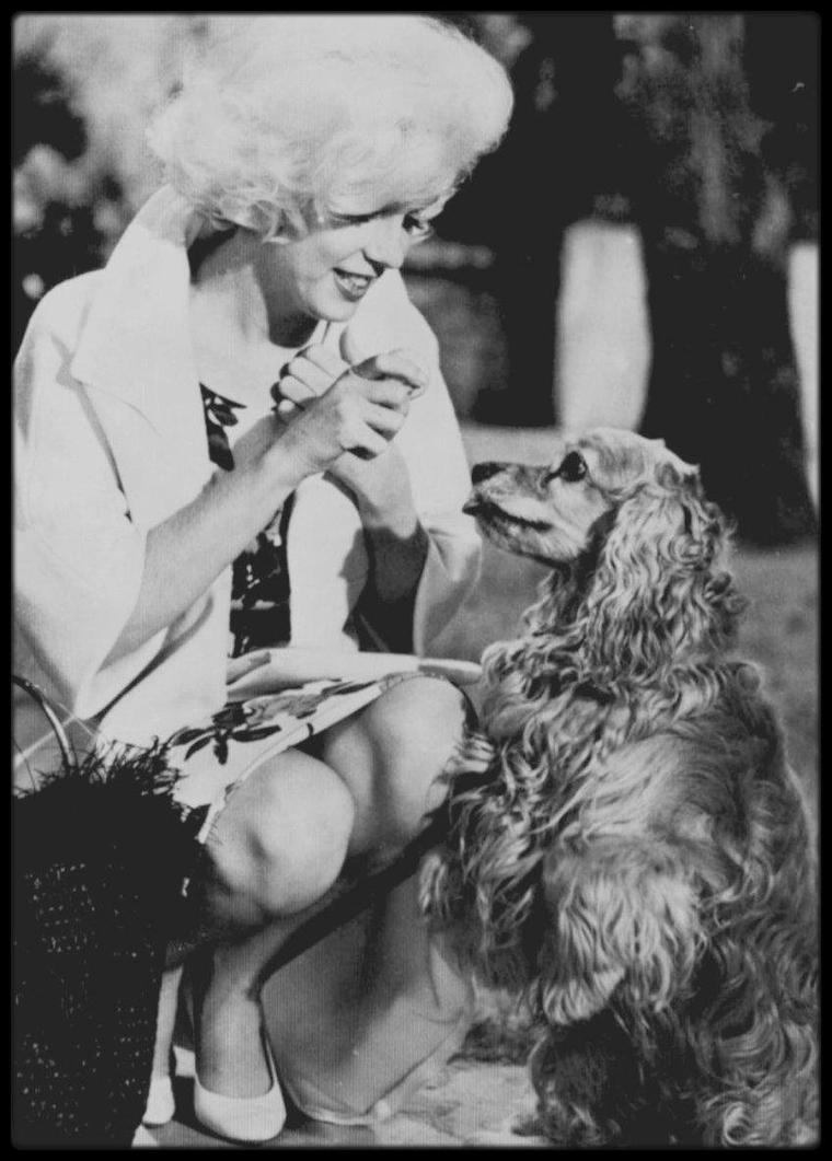 1962 / « Something's got to give » aurait été le trentième film de Marilyn. Seul un tiers fut tourné avant qu'on ne l'abandonne, mais cela n'empêcha pas bon nombre de biographes d'écrire davantage sur ce film inachevé que sur chacun des vingt-neuf films que tourna Marilyn.  « Something's got to give » était pensé comme un remake de « My favourite wife », une comédie très populaire de 1940 avec Cary GRANT et Irene DUNNE, racontant l'histoire d'une femme naufragée que l'on croit morte et qui réapparaît des années plus tard pour découvrir que son mari s'est remarié. Le scénario original, écrit par Sam et Bella SPEWACK, s'inspirait de « Enoch Arden », un poème d'Alfred Lord TENNYSON, qui, lui-même, trouvait son origine dans une histoire de l'écrivain américain David R. LOCKE. On proposa ce film à Marilyn; d'après le contrat qu'elle avait signé en 1956, elle devait encore deux films à la Fox. Il a souvent été dit que la première réaction de Marilyn fut de refuser ce film, mais son psychanalyste, le Dr Ralph GREENSON, entre autres, la persuada d'accepter : il pensait que reprendre le travail ne pouvait être que bénéfique après les bouleversements émotionnels qu'elle avait subis en 1961. L'une des raisons pour lesquelles on fit appel à elle était que la société de production de son ami Dean MARTIN, prenait part au projet. Du point de vue dramatique, le rôle était différent des personnages qu'elle avait interprétés jusqu'alors. Elle incarnait une mère et une épouse, et dans les séquences qui ont survécu, elle dit son texte d'une voix naturelle, et non avec les intonations haletantes auxquelles ses fans étaient habitués. En termes de carrière, c'était un projet d'importance. Les deux films précédents de Marilyn, « Let's make love » (1960) et « The misfits » (1961), n'avaient pas rencontré le succès auquel elle était habituée, et elle voulait désespérément faire taire les critiques qui affirmaient qu'elle était finie. Une fois de plus, elle gagnait nettement moins que les aut
