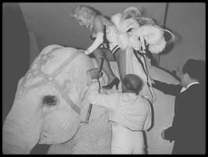"""30 Mars 1955 / (Part III) C'est sur le dos d'un éléphant peint en rose que Marilyn fait le tour du Madison Square Garden pour une action caritative dont les bénéfices seront reversés pour les maladies rhumatismales et l'arthrose, sponsorisée par le """"Ringling brothers Circus""""."""