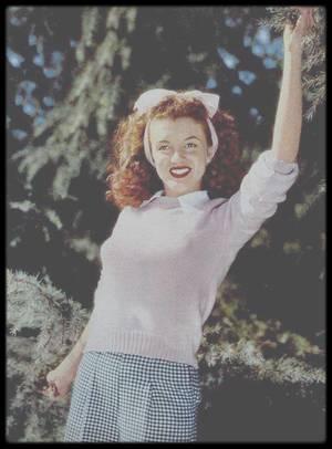 """Novembre 1945 / Vêtue d'un joli pull rose pâle, la très jeune Norma Jeane pose devant l'objectif d'André DE DIENES en 1945. Cela ne fait que quelques moi que sa vie prend un nouveau tournant.  Au début de l'année 1945, elle décide de quitter son travail dans l'entreprise """"Radio Plane"""" qui fabrique des parachutes, entre autres. L'arrivée d'un photographe de l'armée, David CONOVER va bouleverser sa vie en décidant de la photographier sur son lieu de travail. Enthousiasmé par la fraîcheur de la jeune fille, il lui donne envie de commencer un tout nouveau métier qui lui fera gagner bien plus que ce qu'elle gagne et cela dans des conditions bien meilleures… elle devient alors mannequin. Elle signe son contrat à la """"Blue Book Model Agency"""" tenue par Emmeline SNIVELY le 2 août 1945. Le succès de Norma Jeane auprès des photographes est quasiment instantané. Lorsque DE DIENES contacte SNIVELY pour un projet, elle lui donne le nom d'une nouvelle recrue, celui de Norma Jeane. Dès leur première rencontre, DE DIENES est fasciné par ce jeune modèle de 19 ans. Il tombe éperdument amoureux d'elle. Il ira jusqu'à la demander en mariage, ce qu'elle refusera. DE DIENES fit plusieurs séances photos durant les quelques mois qui restaient à l'année 1945 dont celles au pull rose. On y découvre une jeune femme à la frontière entre la petite fille et la jeune femme ambitieuse. SNIVELY ne l'a pas encore fait changer de style, elle est brute. Ses cheveux sont encore frisés, d'une couleur châtain. Son maquillage est quasiment inexistant, seul le rouge à lèvre rouge frappe le regard. Le noeud rose dans ses cheveux la rattache encore à l'enfance ainsi que la couleur du pull. La séance a lieu au mois de novembre 1945. En fait Norma Jeane et la Nature sont un cocktail détonnant. DE DIENES était véritablement un photographe d'extérieur, sachant tirer aussi bien partie de la Nature et de son modèle."""