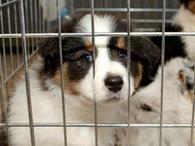 Ne l'achetez pas, adoptez-le !