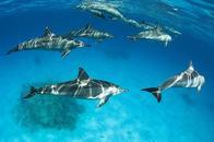 La captivité des dauphins