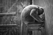L'expérimentation animale