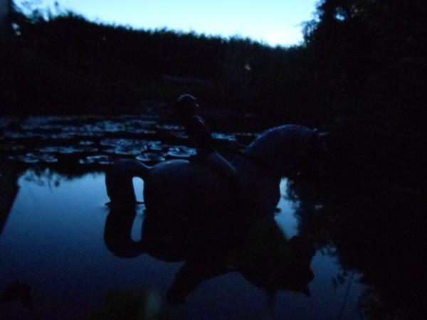 Photo pour le photoshow pour Le Haras du Cerf De Lune :)