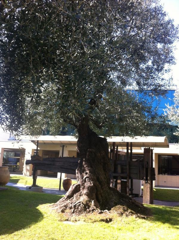 Museo dell'Olivo, Imperia