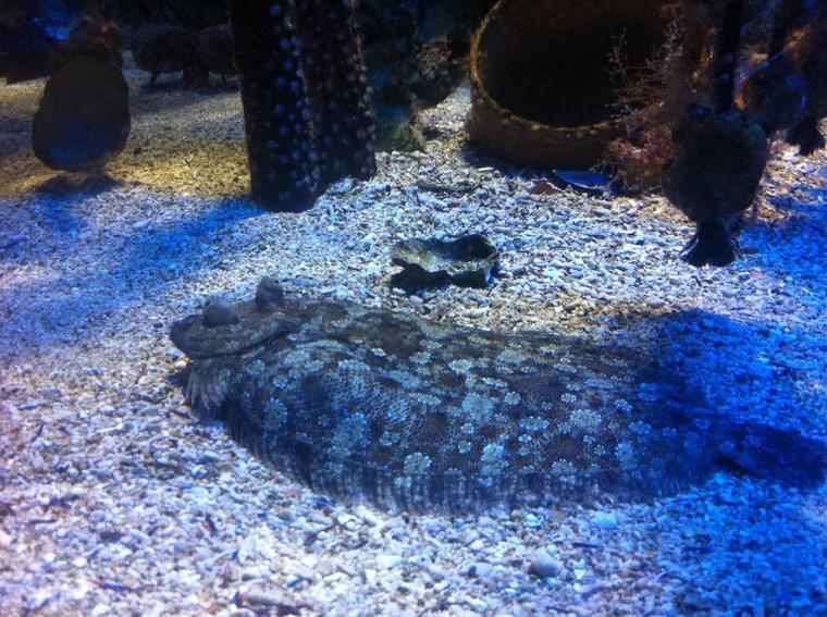Visite au Musée océanographique de Monaco