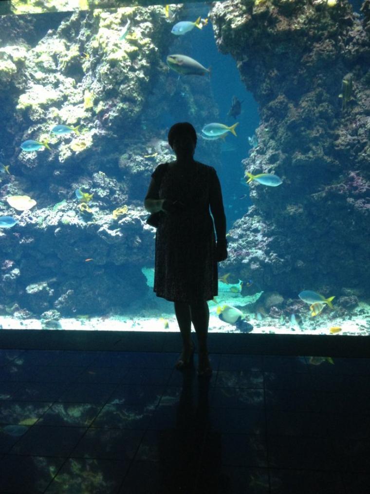 Aquarium fin (pour cette année)