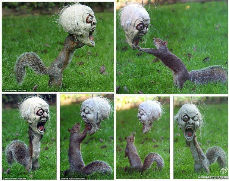 ecureuille  en folie