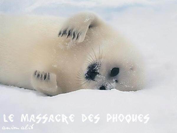Le massacre des phoques
