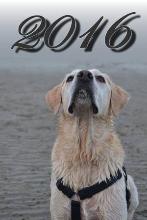 Article Spécial : Résolutions pour 2016 !
