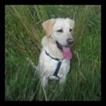 «Si tu es perdue, trouve un chien. Il t'indiquera le bon chemin à suivre.» Petit plan.