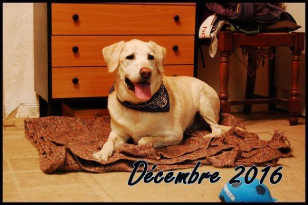 ► Bilan Mensuel Décembre - 2016