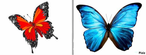 les papillons~