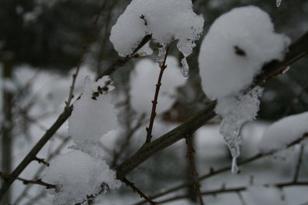 31 janvier 2012