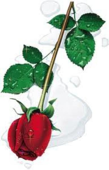 une rose peut etre pour ti
